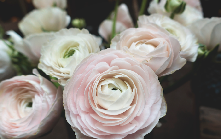 Soft Muted Shades for your wedding colour scheme