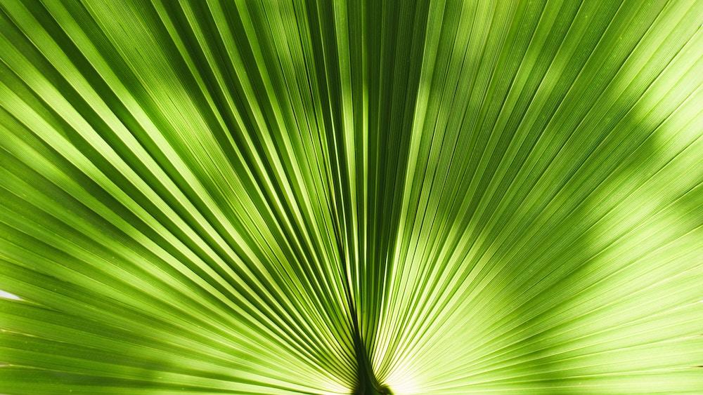 40 shades of green