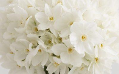 Beautiful Seasonal Flowers for a Winter Wedding